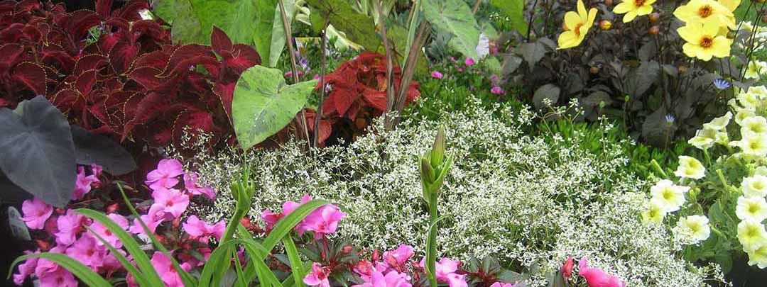 How To Grow Plants In Hawaii Keokea Perennials